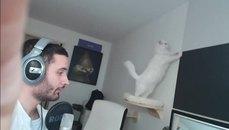史上最搞事的貓 實況主崩潰!
