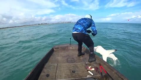 別人釣魚 他釣鯊