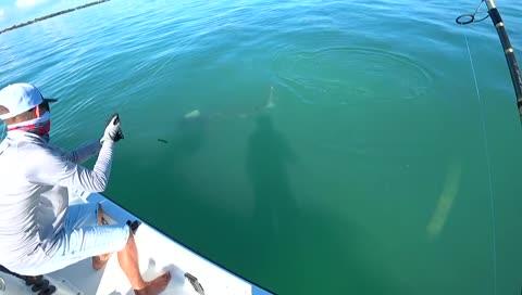 釣到小虎鯊