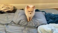 小狗與牠舒服的小枕頭