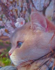 絕美的貓咪寫真