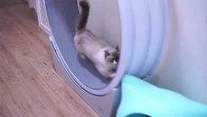 藍眼貓貓在家做點運動