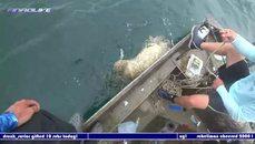 巨型石斑魚