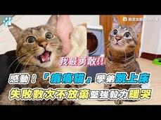 網友分享無法正常行走的小貓日常